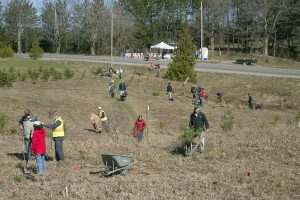 Tree Planting at Gosling Forest Photo Credit: Gary Hall
