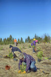 treeplanting-by-gary-hall