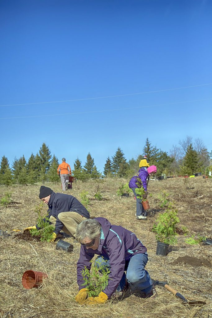 treeplanting-by-gary-hall