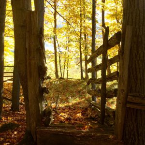 2016-fall-bb-woodland-fence-fb-joyce-redford