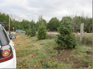 2016-hv-parking-lot-spruce-trees-csheppard
